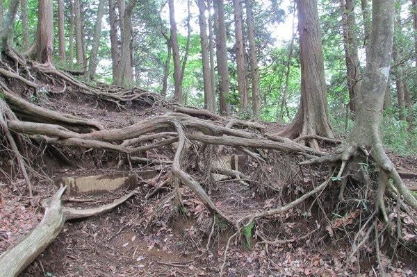 浅間山ハイキングコース登山道