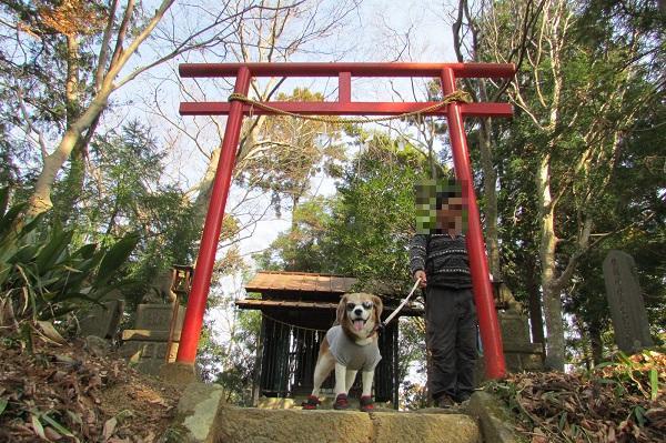 津久井湖城山公園飯縄神社