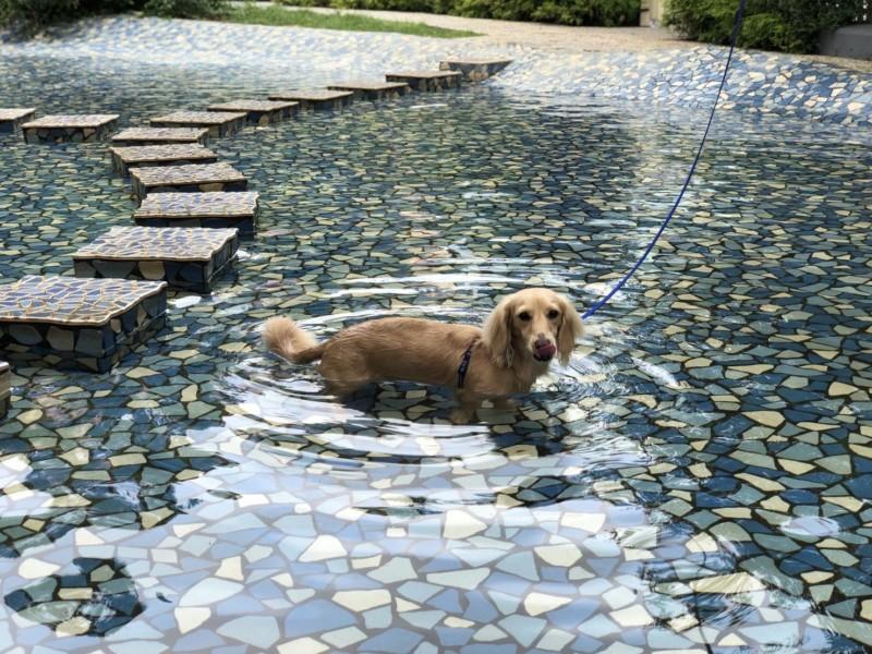 じゃぶじゃぶ池に入る愛犬