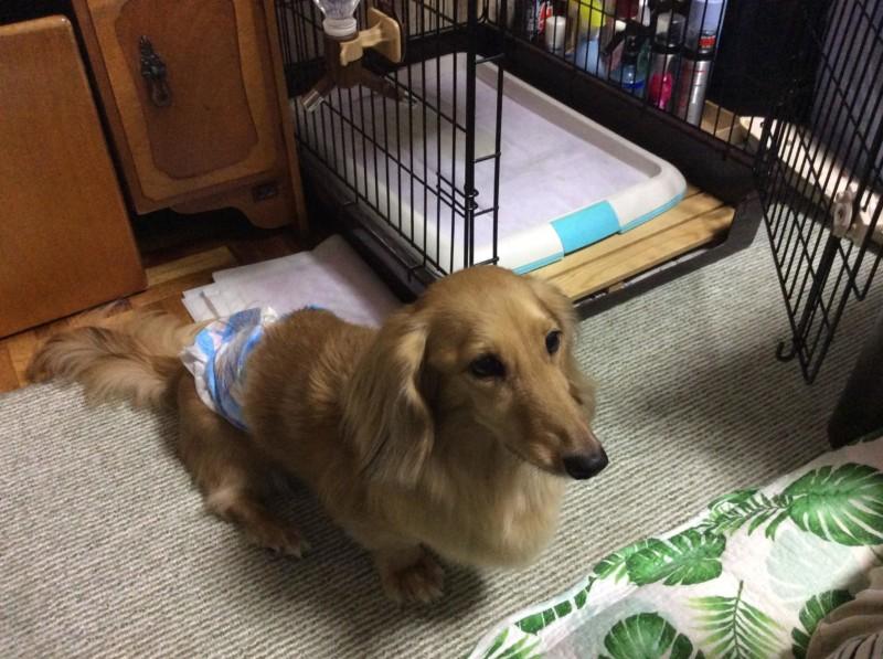 改造したペットケージと愛犬