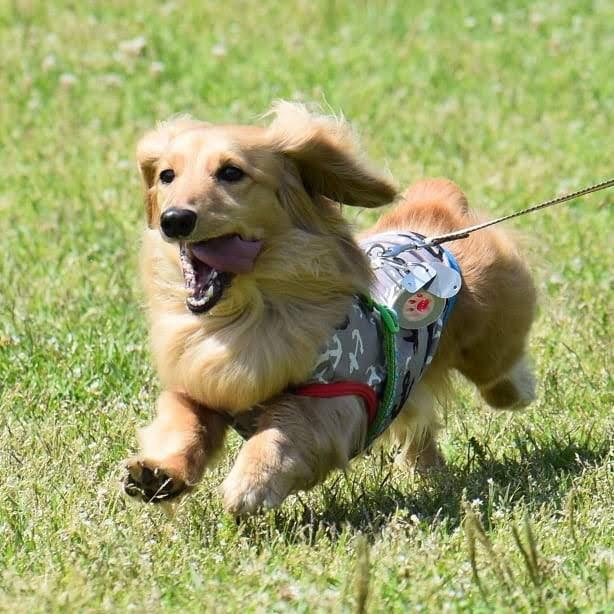 近くの草原で走る愛犬