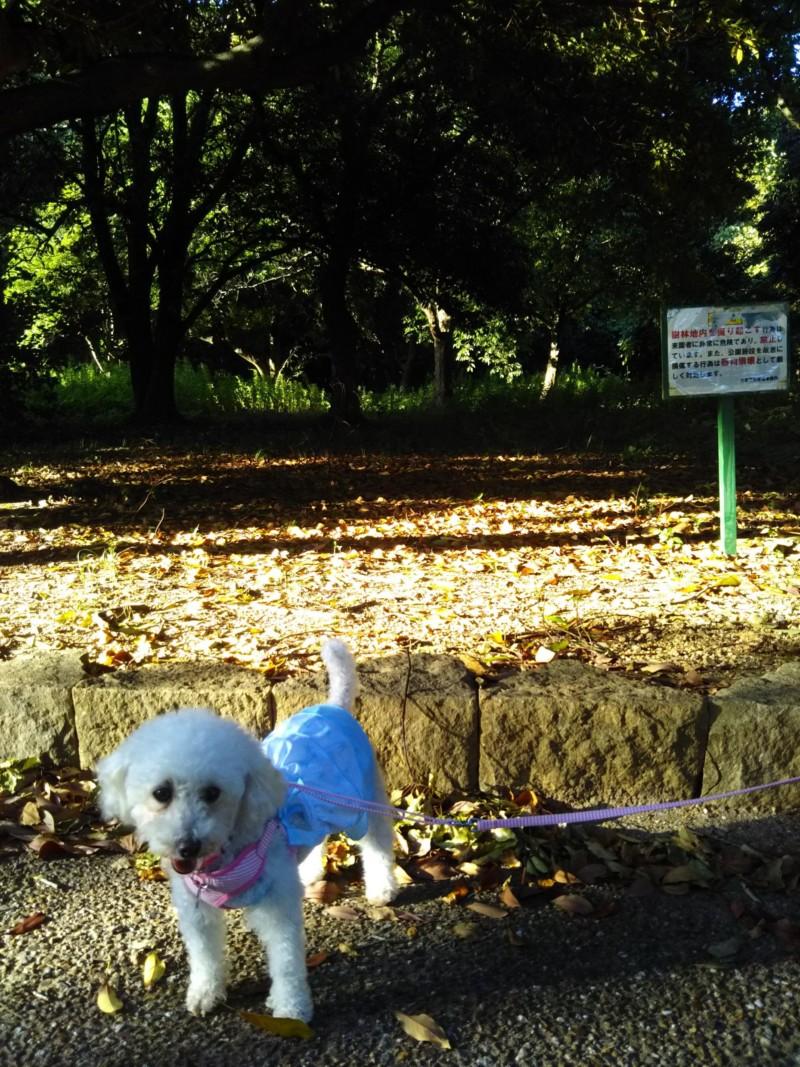 木漏れ日なら暑くない!大泉緑地にて。