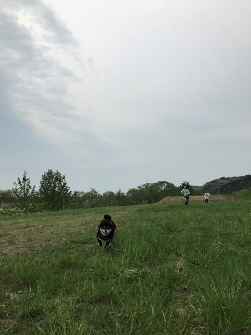 鯵ヶ沢キャンピングパーク 敷地内の草原を走る愛犬