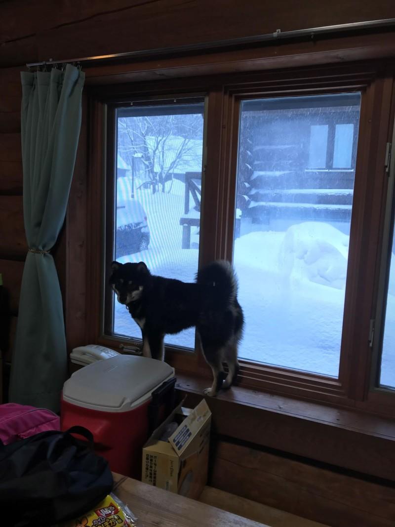 鯵ヶ沢キャンピングパーク ログハウスの窓から見える雪景色と愛犬