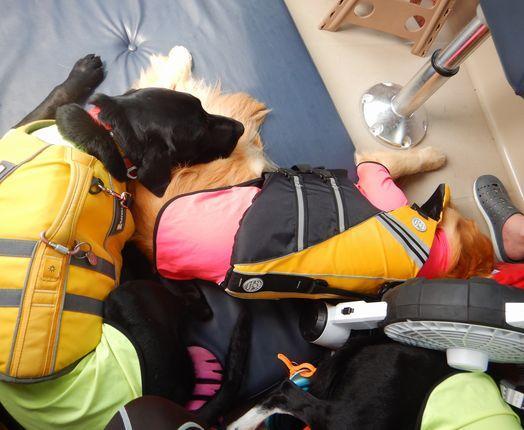 揺れる船中で爆睡するワンちゃんたち。