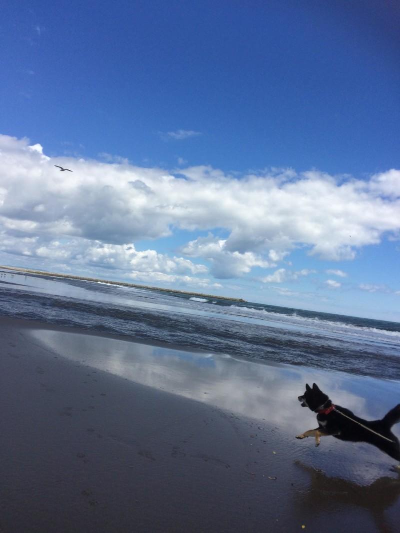 カモメを追いかけて波沿いを駆ける愛犬