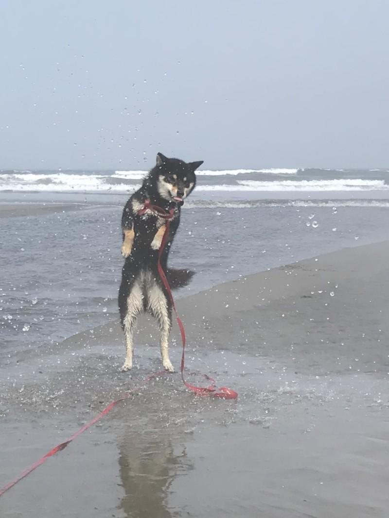 水浴びをする愛犬