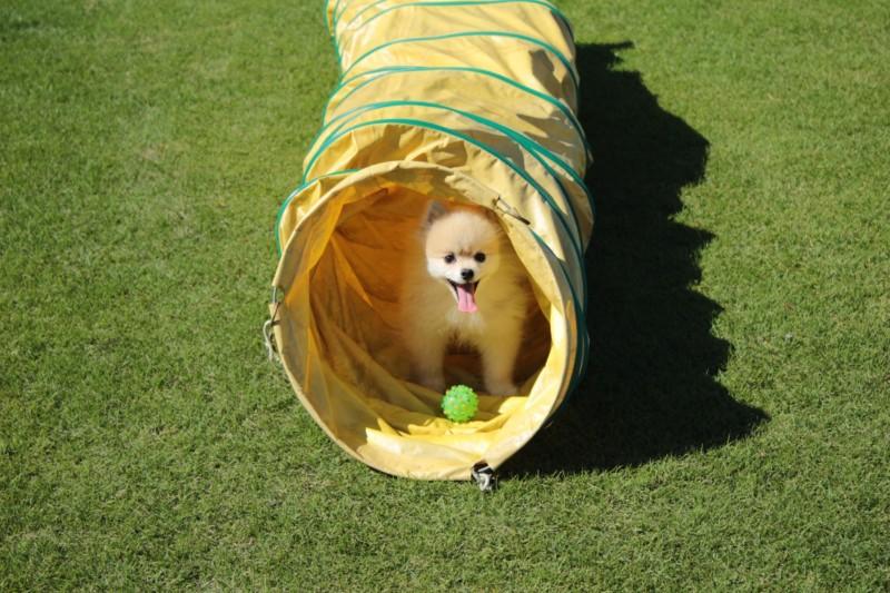 リゾートホテルオリビアン小豆島のアジリティーで遊ぶ愛犬