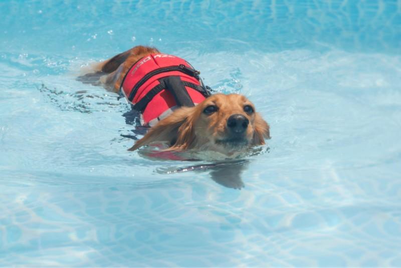 初めてでも上手に泳げました