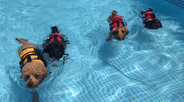 みんなで一緒に泳ぎました