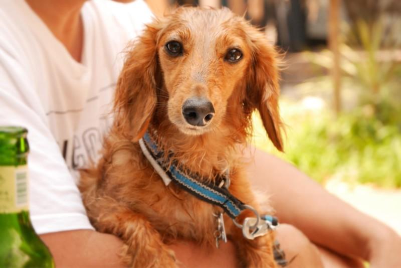 自然乾燥中の愛犬KAI