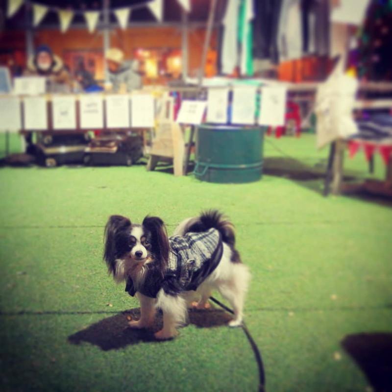 下北沢ケージでは保護犬イベントも開催されていたっけな