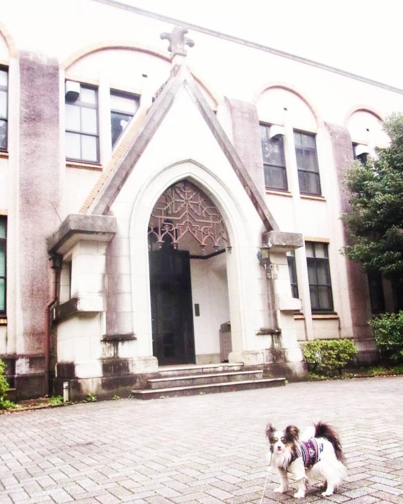 建築好きの飼い主にもお勧めの東大駒場キャンパス犬散歩