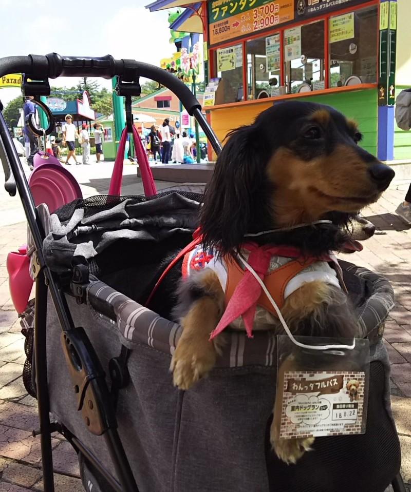 わんっダフルパス」を付けた愛犬