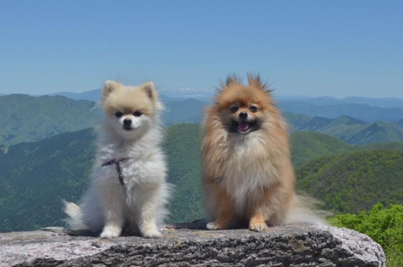 伊吹山道中 信州の山と愛犬