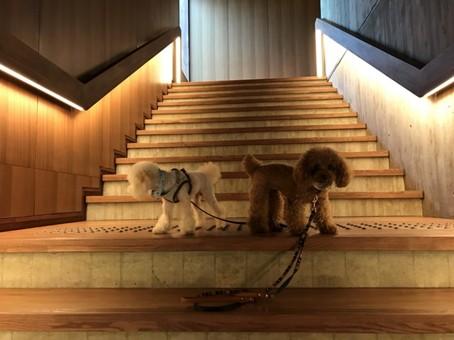 レジーナリゾート旧軽井沢の階段