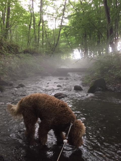 キャンプ場を流れる川で遊ぶ愛犬ルーナ