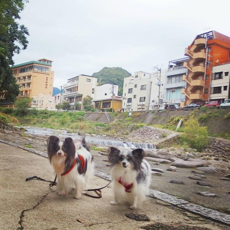 箱根湯本の川沿いをのんびり犬散歩