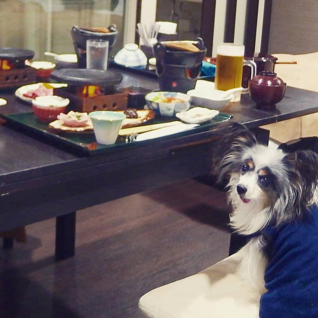 食卓の豪華な人間の食事に愛犬もびっくり!