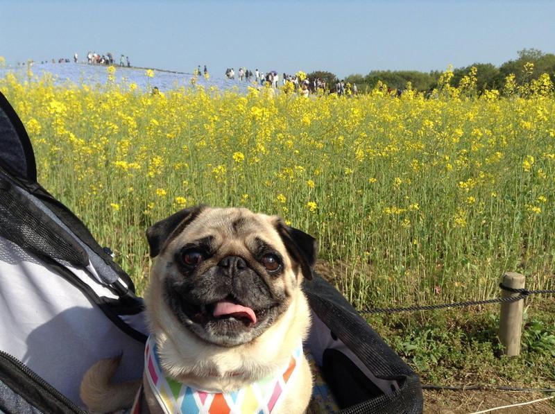 国営ひたち海浜公園 愛犬と みはらしの里