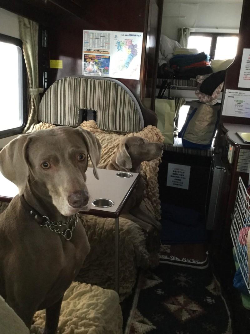 キャンピングカーの車内に座る愛犬