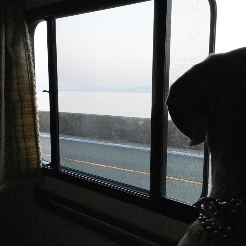 キャンピングカーの車内から外を見る愛犬の後ろ姿