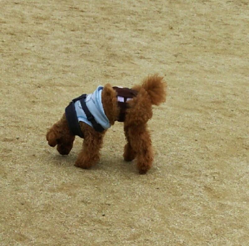 ドックランでランランせずクンクンばかりの愛犬
