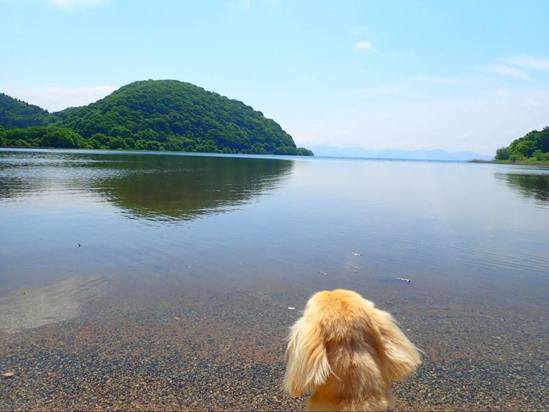 猪苗代湖畔でたそがれる愛犬