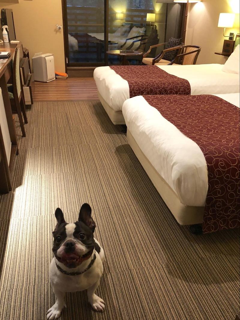 高山わんわんパラダイスホテルの室内の様子と愛犬フレンチブルドッグ
