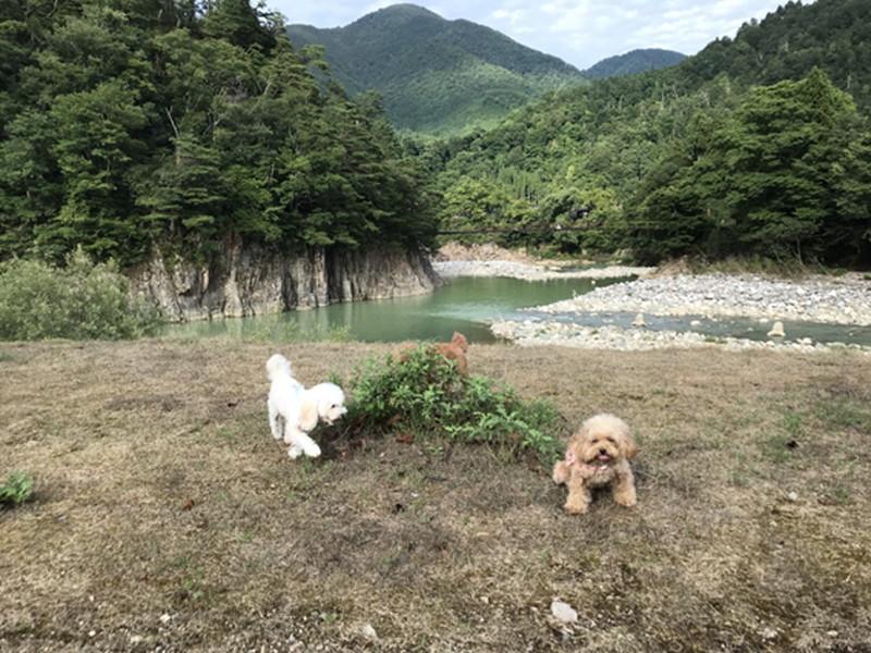 庄川と愛犬3頭のマナ、マオ、サラ