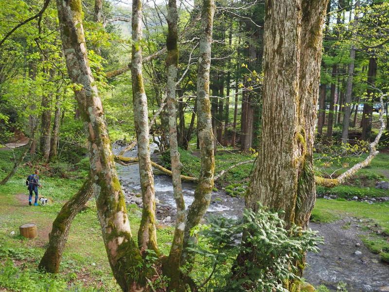 高山わんわんパラダイスの敷地内にある清流沿いのお散歩コース