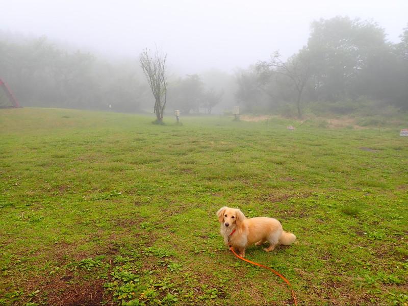 霧まみれの朝霧ジャンボリーオートキャンプ場
