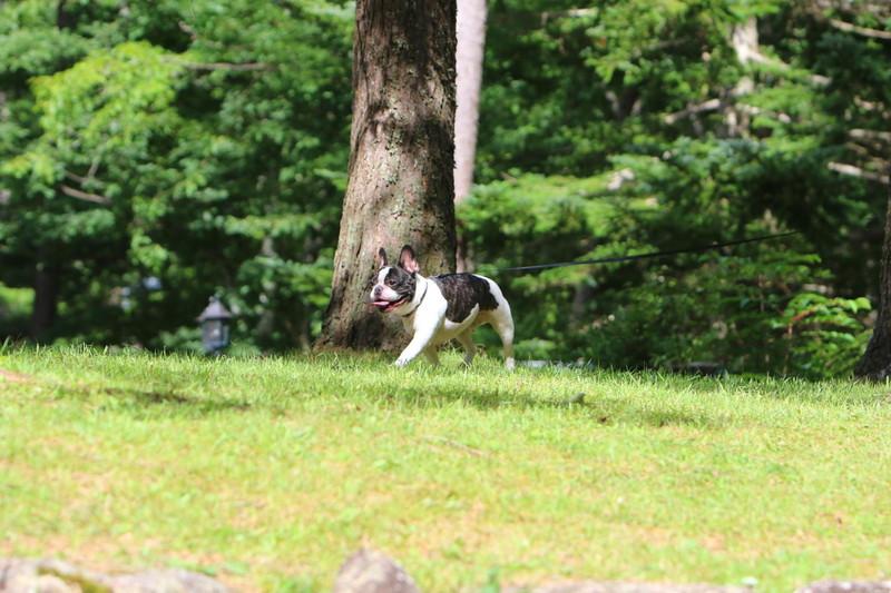 プロのカメラマンに撮ってもらった愛犬フレンチブルドッグの写真