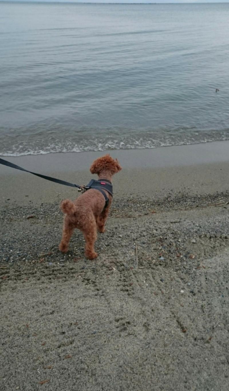初めての湖に佇む愛犬