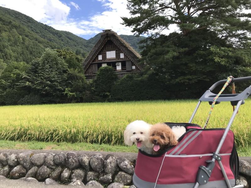 白川郷の合掌風景と愛犬