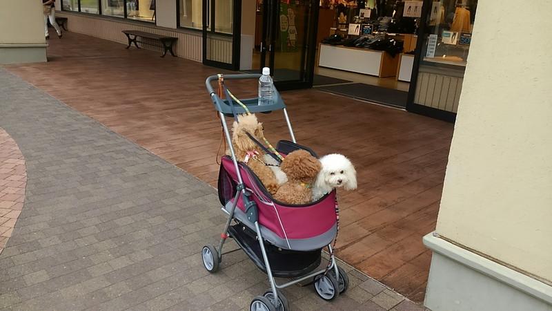酒々井プレミアム・アウトレットの店舗前で待つ愛犬