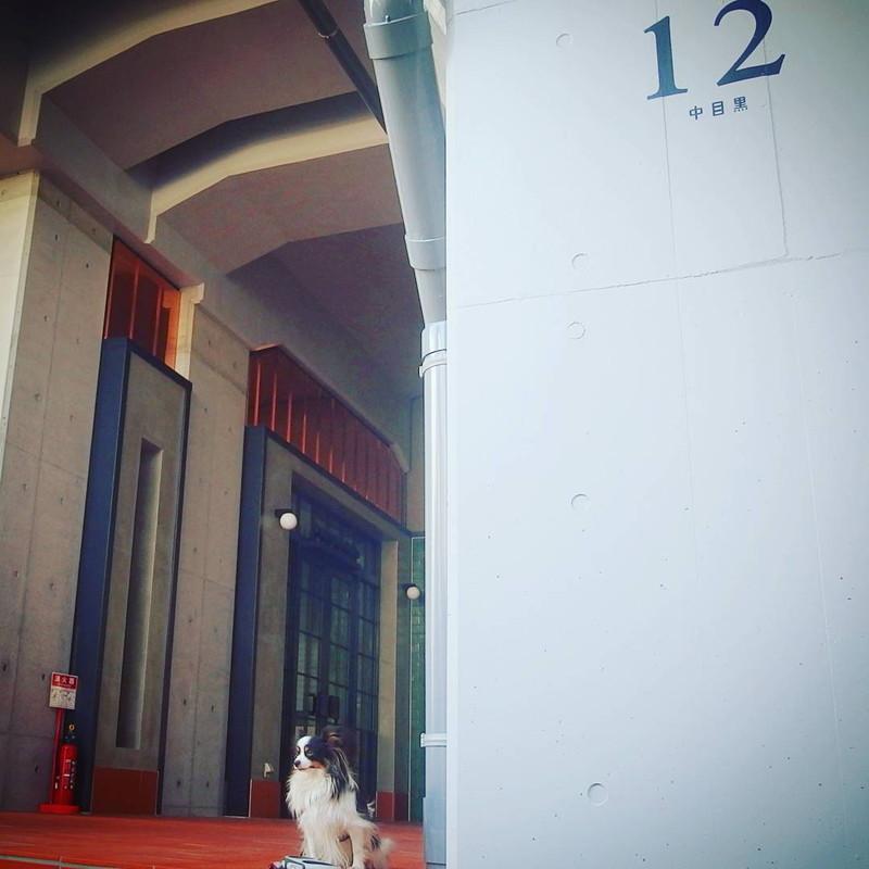 さあ一緒に目黒川散歩しようよ、待っているからね!