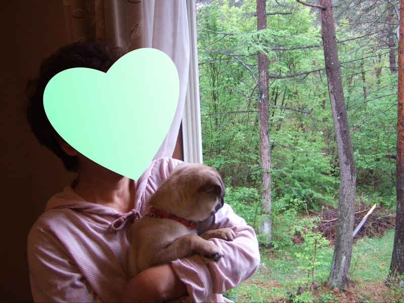 北軽井沢 ペンションブロードウェイのお部屋で愛犬と