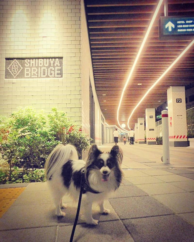この渋谷ブリッジの通路を抜け左方面に行くと恵比寿、右に向かいずっと歩くと代官山だよ