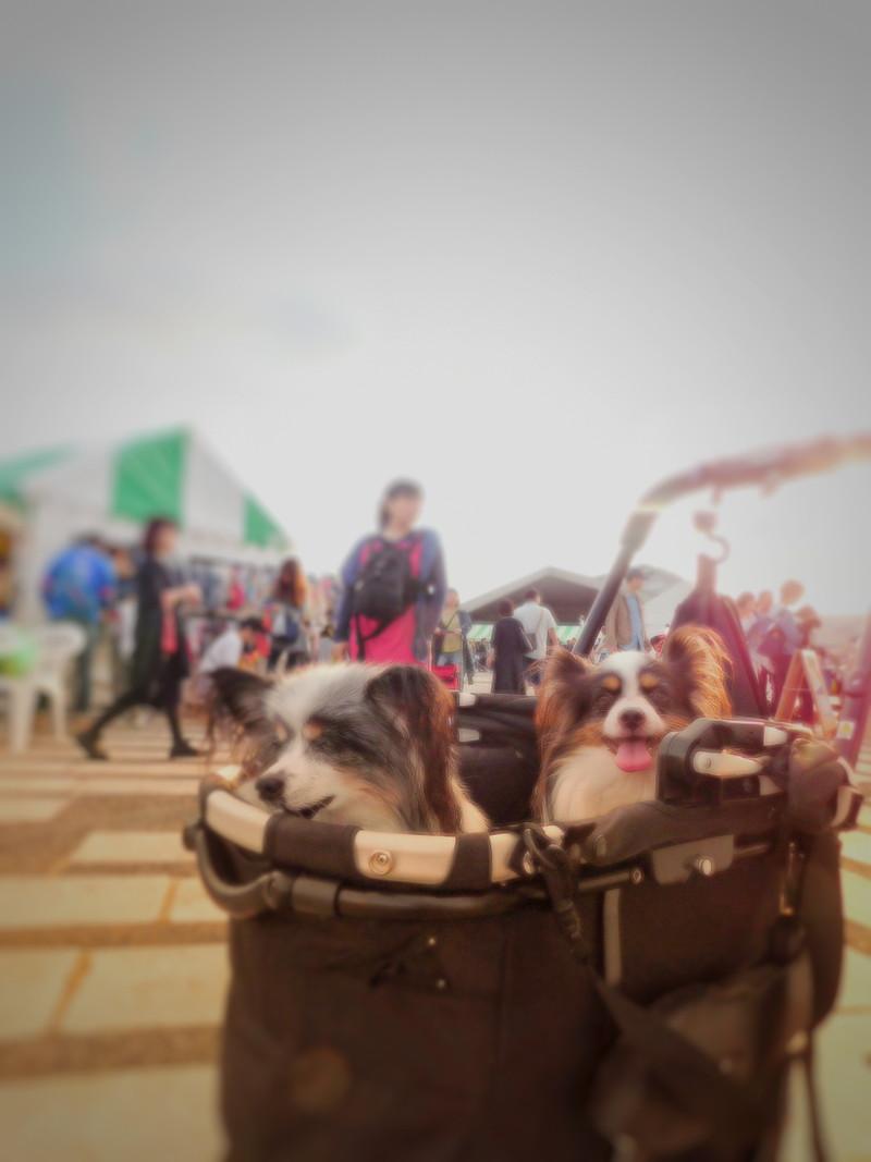 今年も来たよ、駒沢公園わんわんカーニバル!
