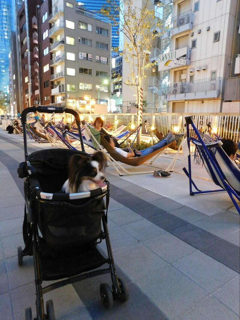 ぼくは怖がりだからバギーの中で渋谷ストリーム見物だよ