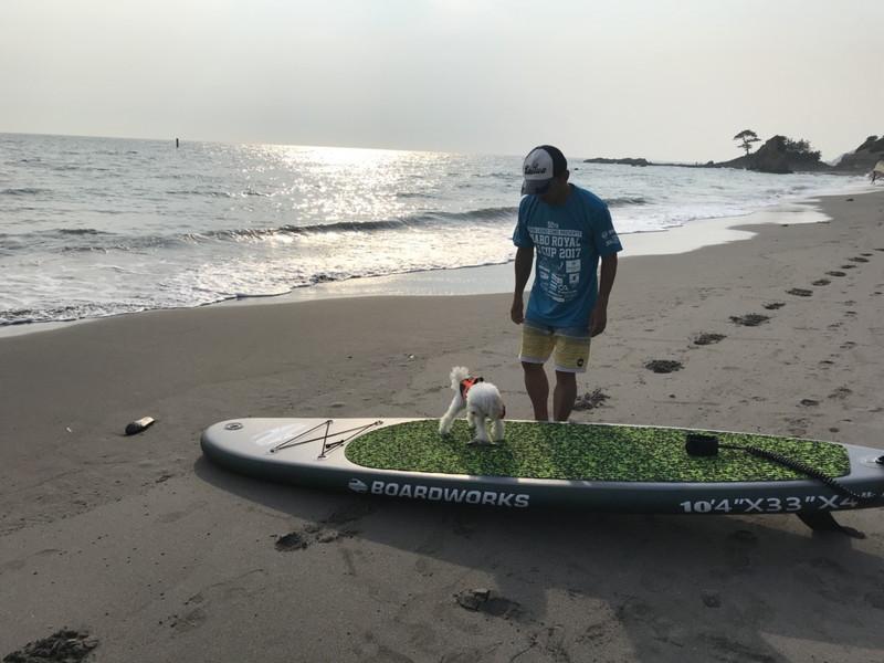 秋谷海岸に立つ少年とトイプードル