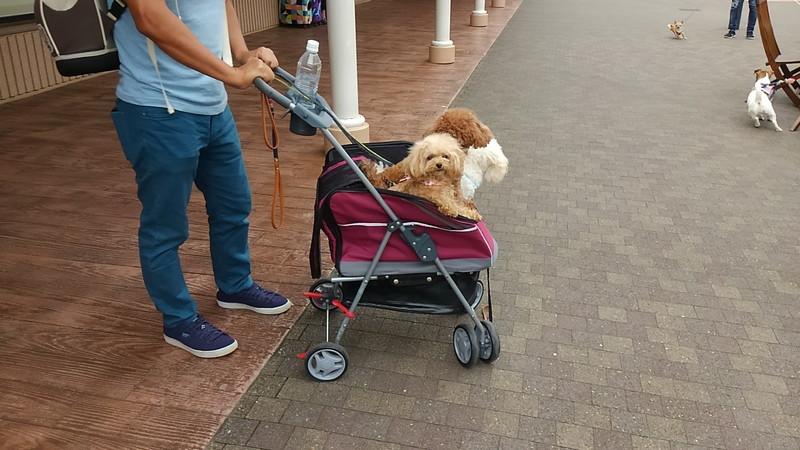 酒々井プレミアム・アウトレットは様々な犬と遭遇する場所