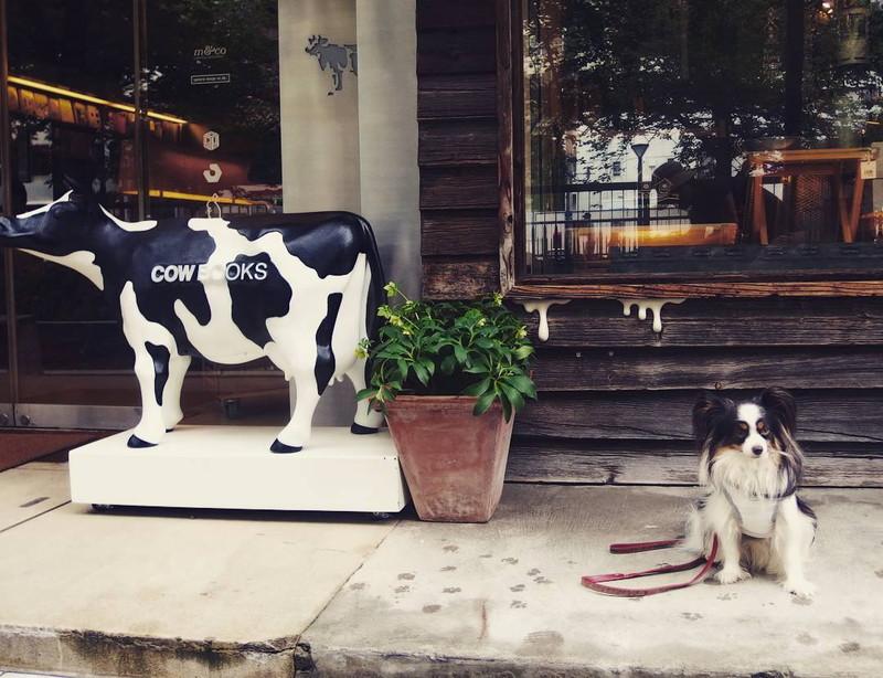 中目黒 cowbooks は目黒川沿いの有名な本屋だよ