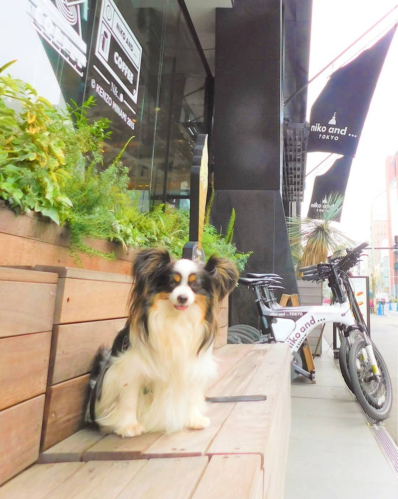 シェアバイクで愛犬をリュックに入れてのお出かけもいいよね(明治通りにて)