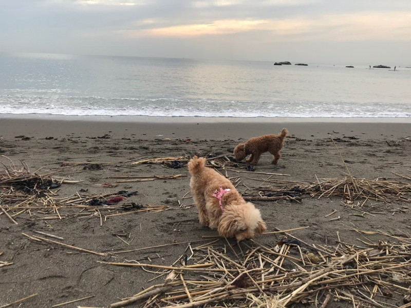 葉山 長者ヶ崎・大浜海岸と愛犬