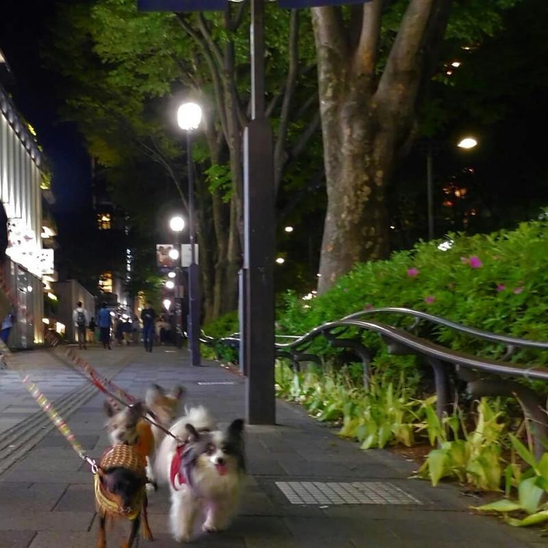 普段の夜の表参道の通りだよ