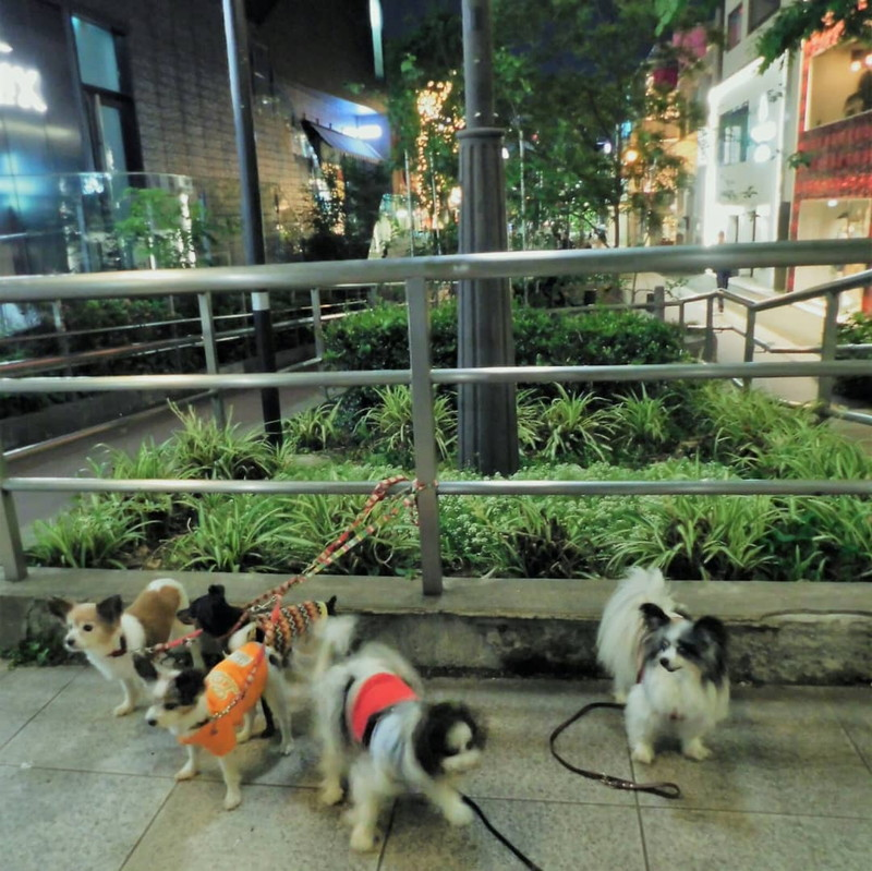 表参道に面した渋谷方面側のキャットストリート入口だよ