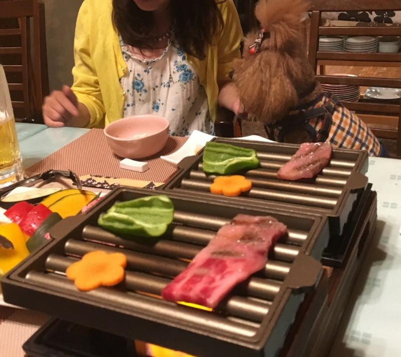 用意しくれたイスでブッフェのお魚を食べる愛犬とメインの鳥取和牛の鉄板焼き