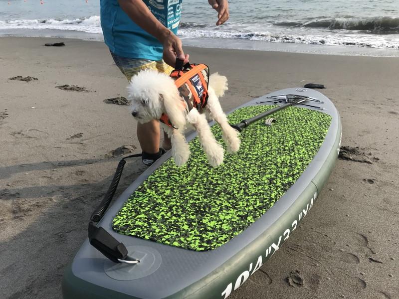 愛犬とSUP